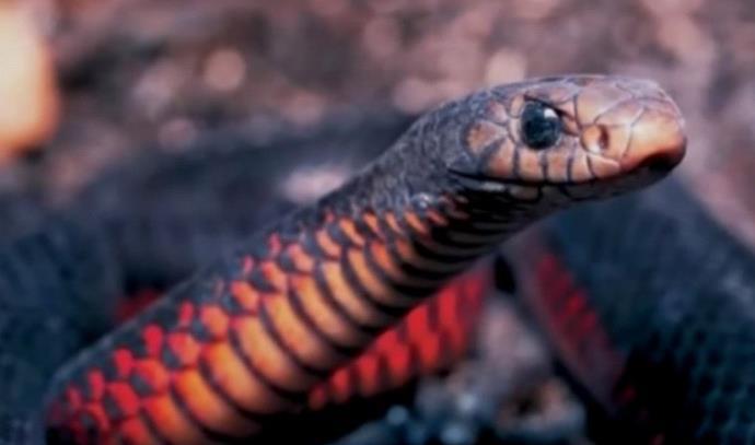 אדם נעצר על החזקה לא חוקים של נחשים ארסיים, תנינים ולטאה