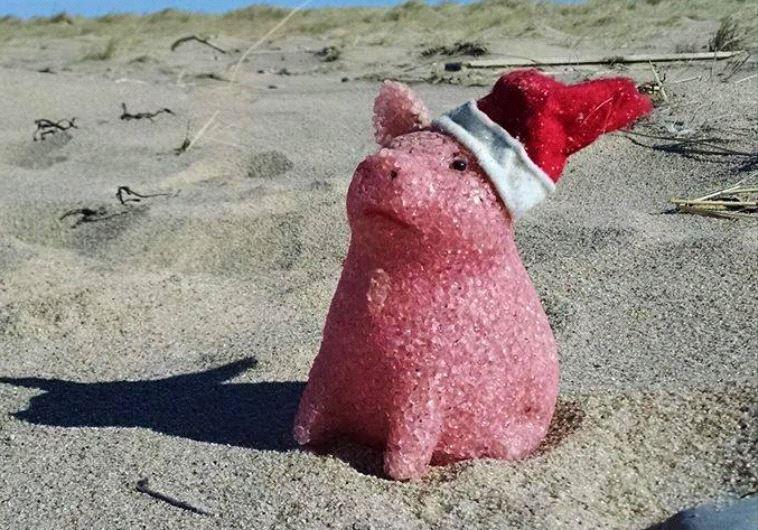 דברים מוזרים שנסחפים לחוף