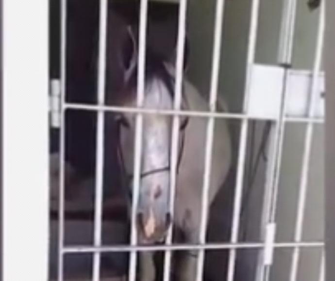 סוס בכלא