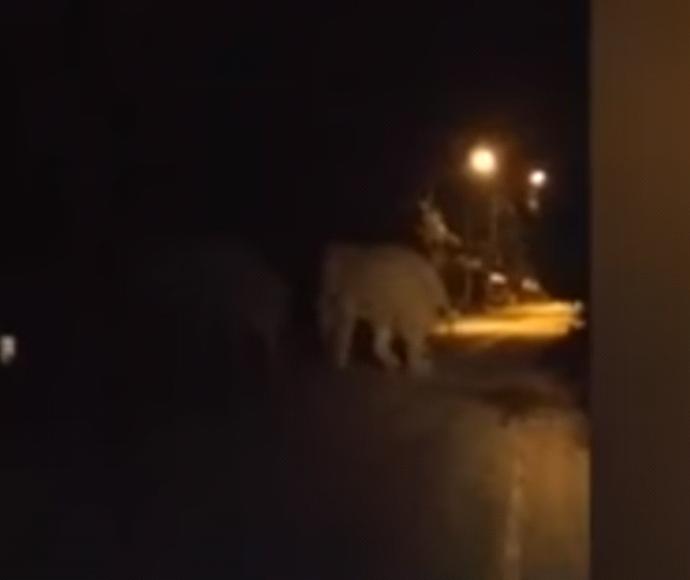 פיל נפגע