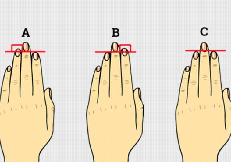 אורך האצבעות חושף דברים על אישיותכם וחיי המין שלכם. צילום מסך