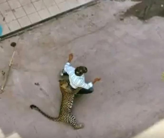 נמר תוקף בהודו