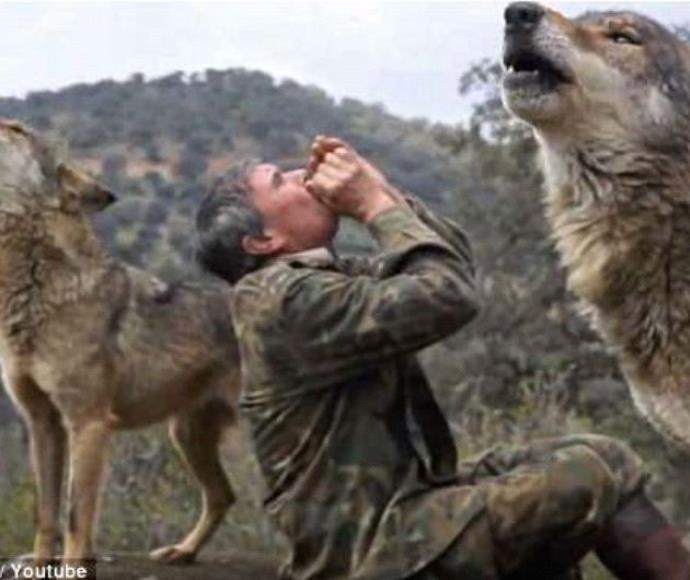 גדל עם זאבים